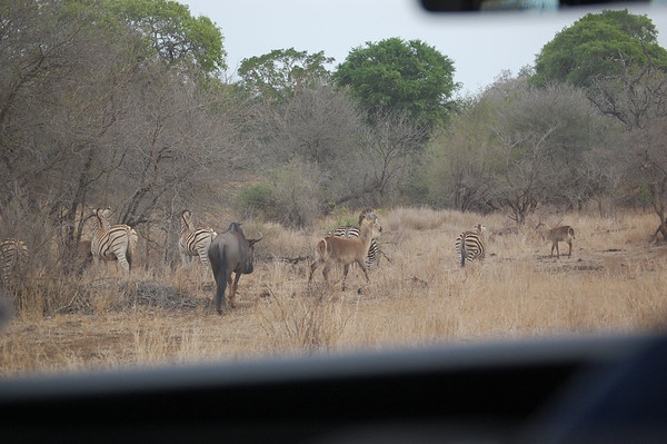 Kruger Multiple Species