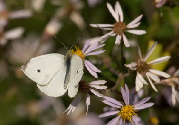 butterflies_13sept09QBG002.jpg