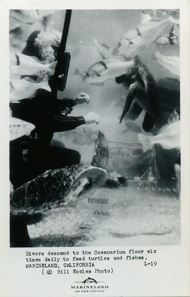 Oceanarium Diver