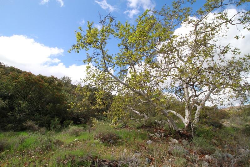 32633-Trabuco-Canyon-Rd-Mitchell-East-Trabuco-Canyon_92.JPG