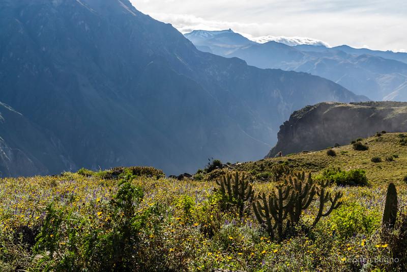 Colca Canyon-1163.jpg