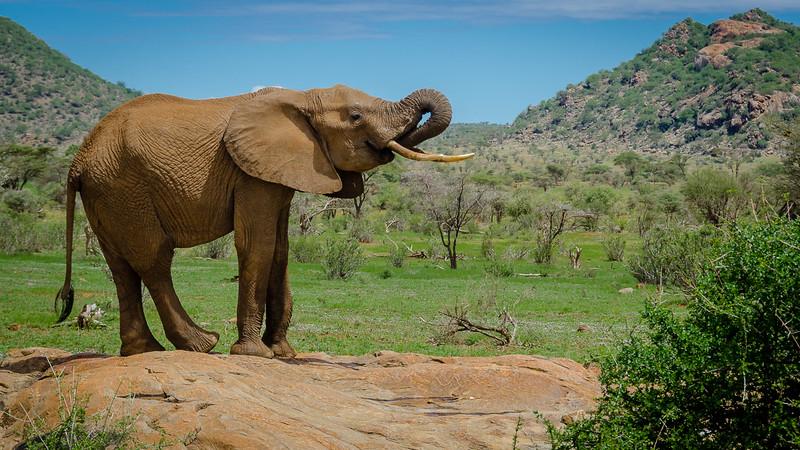 Elephants-0203.jpg
