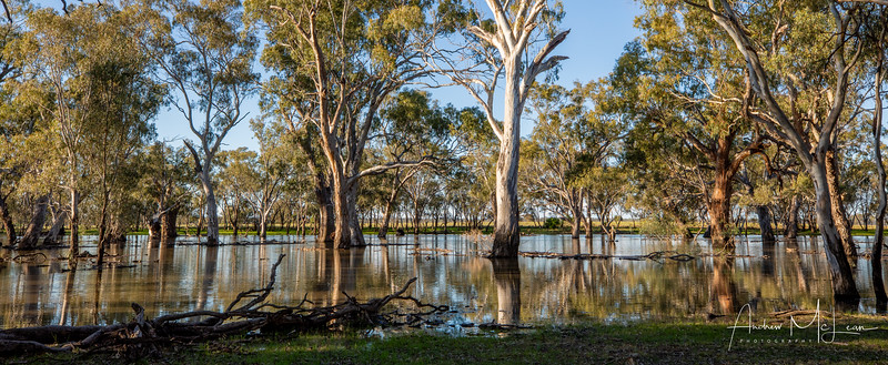 Flood Water - August
