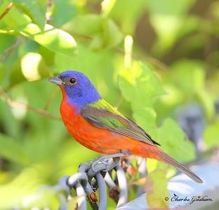 Florida Family Bird Trip / July 24th-26th, 2014