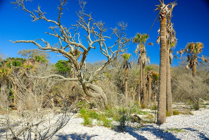 Botany Bay Sea Trees 4.jpg