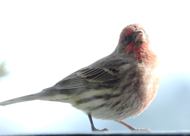 birds (138).JPG