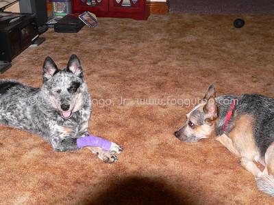 Bushie and Bandi