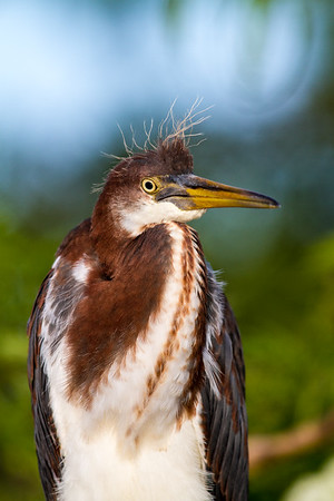 Gatorland - Birds