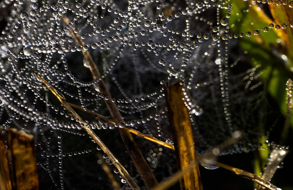 Webs and drops