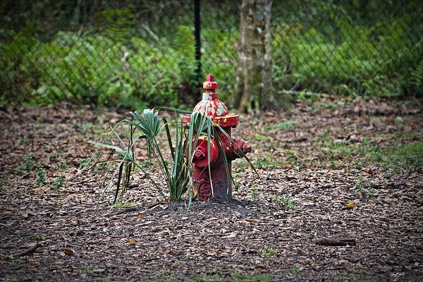 daily sightings...2021-02-16...Chestnut dog park