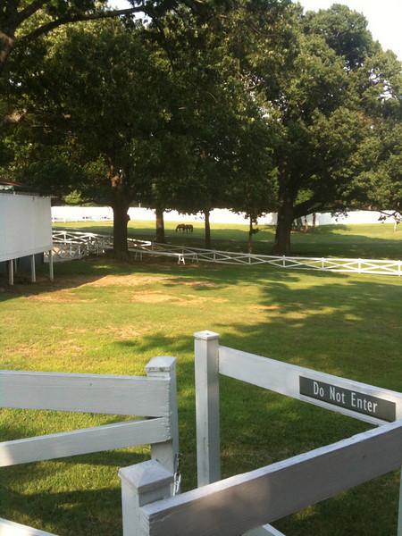 030 Horses stabled at Graceland
