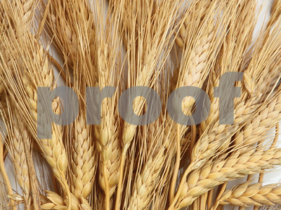 wheat-glut-leading-farmers-to-plant-less-of-the-weed-that-feeds-but-glut-may-not-last-much-longer