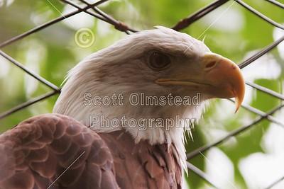 2009 Columbus Zoo (07-11-09)
