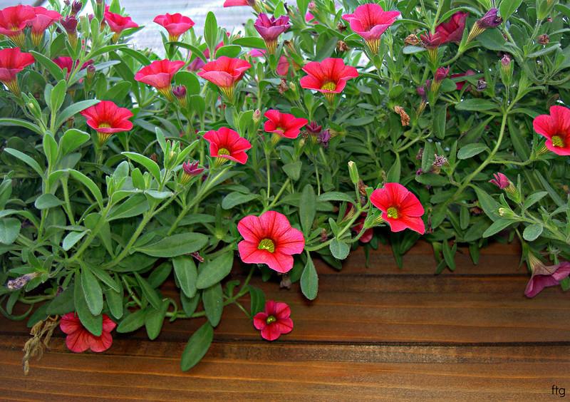 gardenality 036.jpg