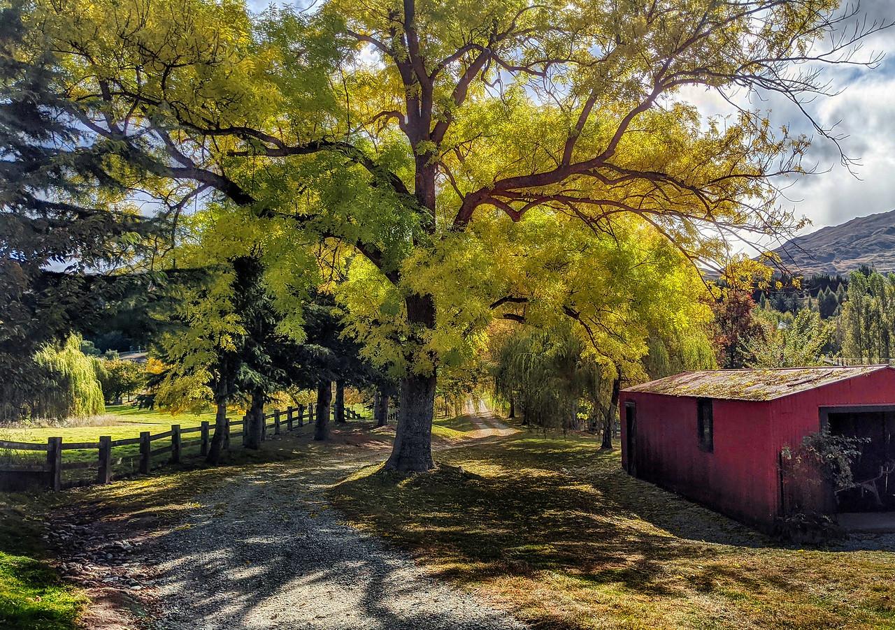 NZ Fall 4