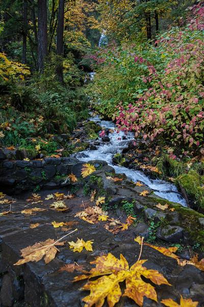 Oregon October  raodside 101
