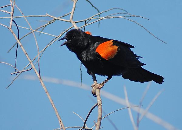 BIRDS - Index