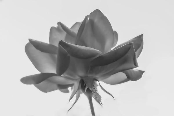 Black & White ~ 2019