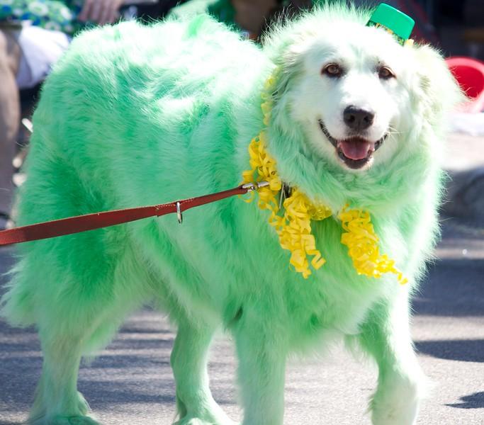 St Patricks Day parade 21 of 27