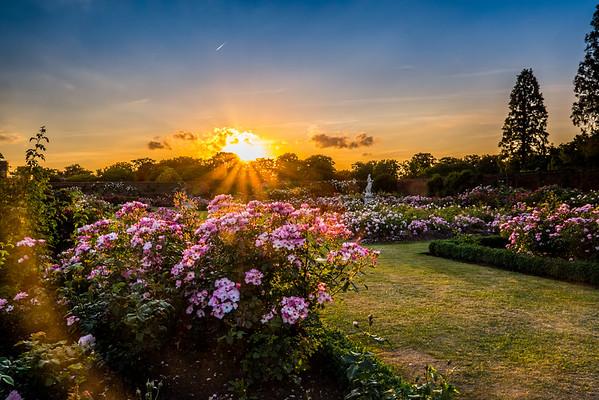 Rhubarb - Hampton Court Palace
