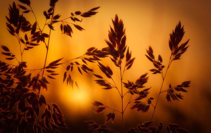 The Magic of Light-044.jpg