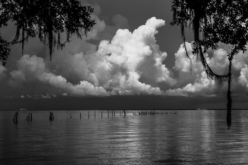 Storm Cloud & Moss BW 061619 (1 of 1).jpg