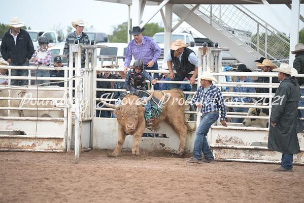 Mini Bulls