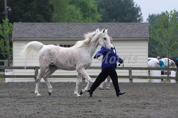 2008 VAHA District IV Horse Show April (Spotsylvania, VA)