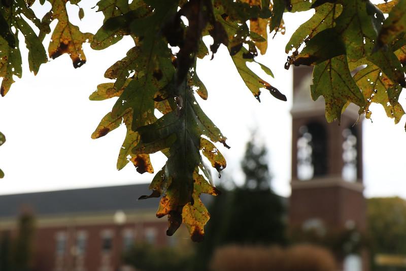 Fall Campus
