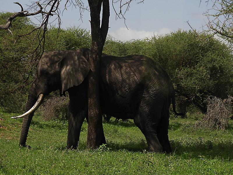 Elephant DSCN0231.jpg
