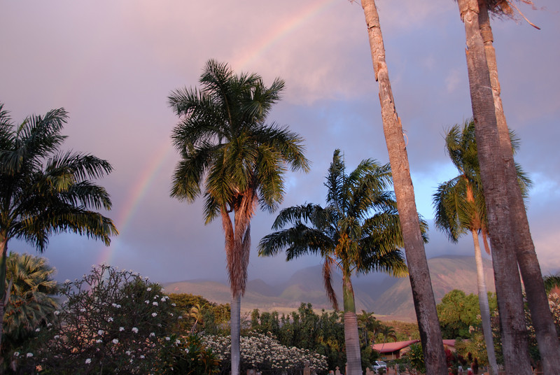 Palm trees and rainbow during sunset in Lahaina, Hawaii