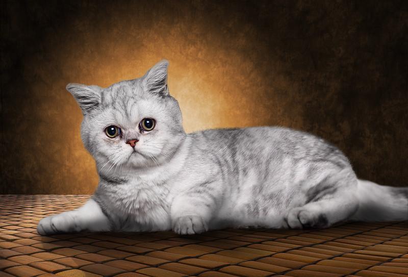 Lachine-cat-3.jpg