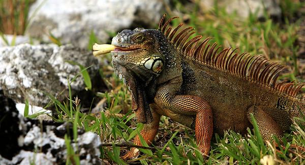 Florida Scenic & Nature Images