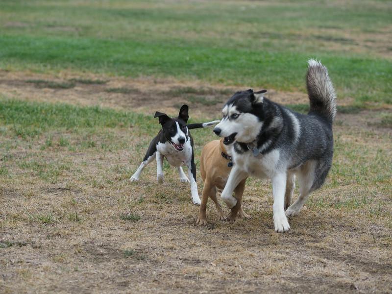 20140816_Dogs_49.jpg