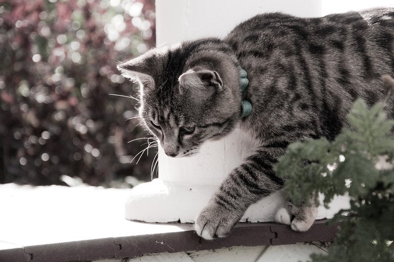 2012.10 - Chad's birthday: wine tasting in Prosser, WA. Meow.