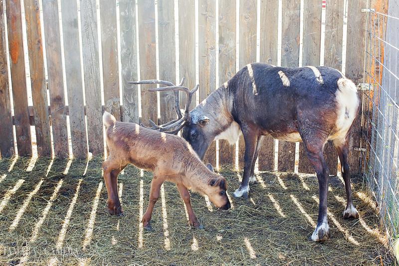 Reindeer Farm-2.jpg