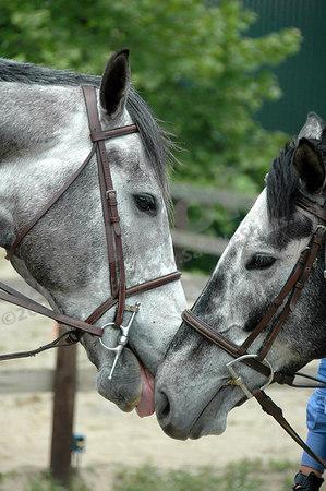2006 Horse Show Season
