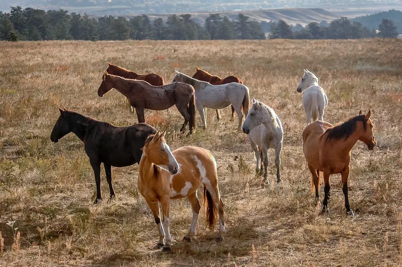 Wild Horse Group #1