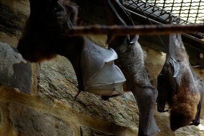 Philadelphia Zoo 6 29 13