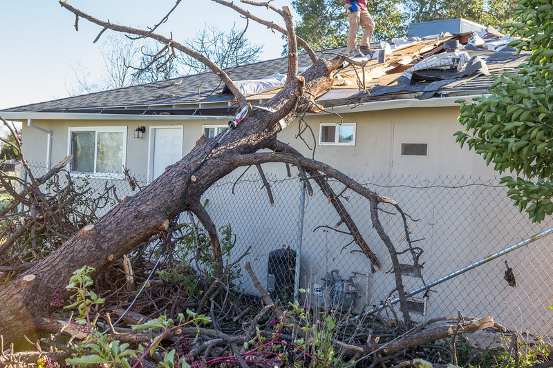 5671 Wallace Ave - Tree 1030am 12 16 2017 Extremly Windy Conditions-91.jpg