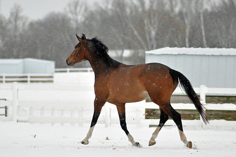 Snowy Dalanta 075 RETOUCHED.jpg