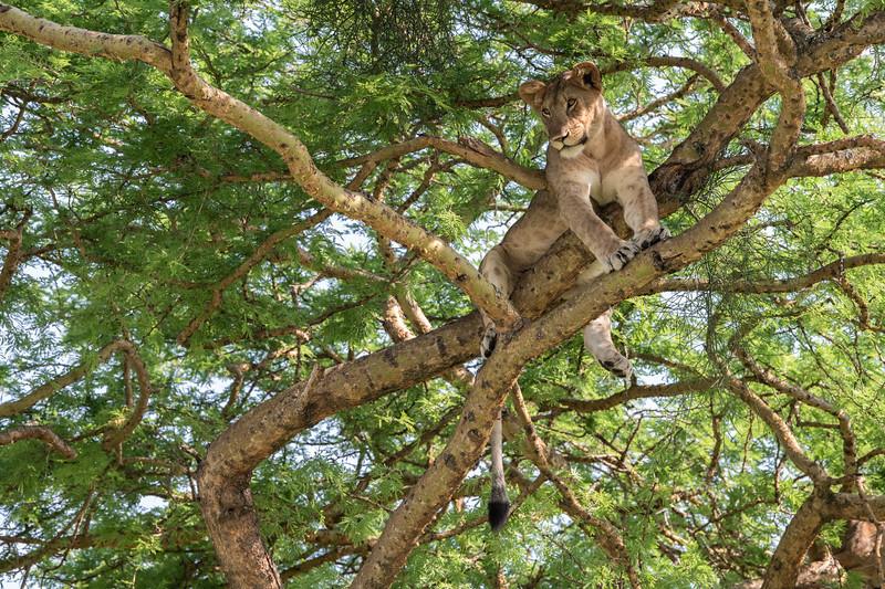 Uganda_T_QE-1553.jpg