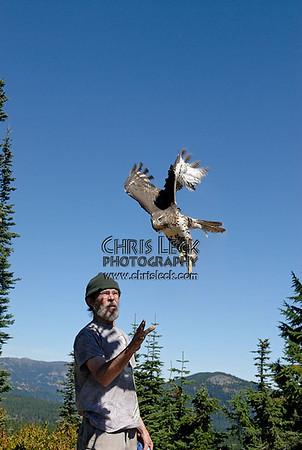 Bonney Butte Raptor Migration Project, Sept. 12, 2006