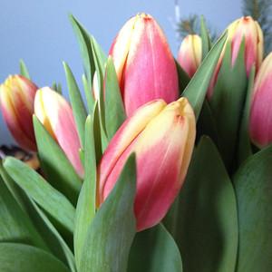 2014-Flowers