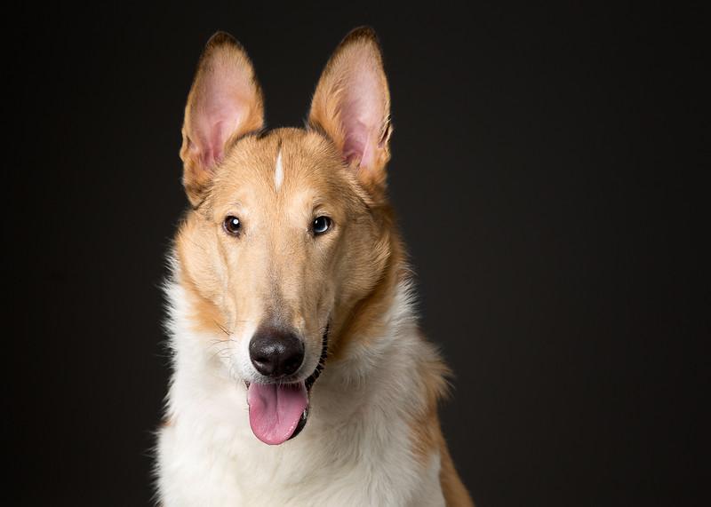 Dogs-8-Edit.jpg