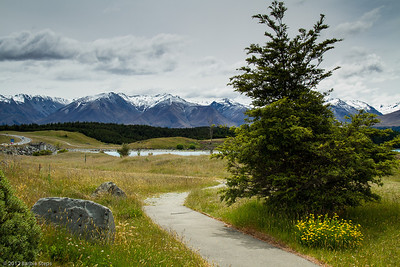 NZ - Flowers and Landscapes