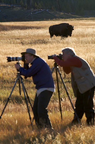 Photographers must keep a wary eye on Bison (unlike these two). They are unpredictable creatures [September; Yellowstone National Park, Wyoming]