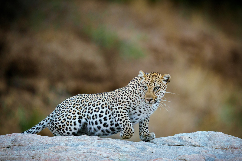 LeopardHills-20191029-2326.jpg