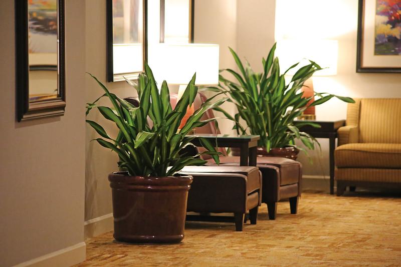 Hilton_plantsandChairs.jpg