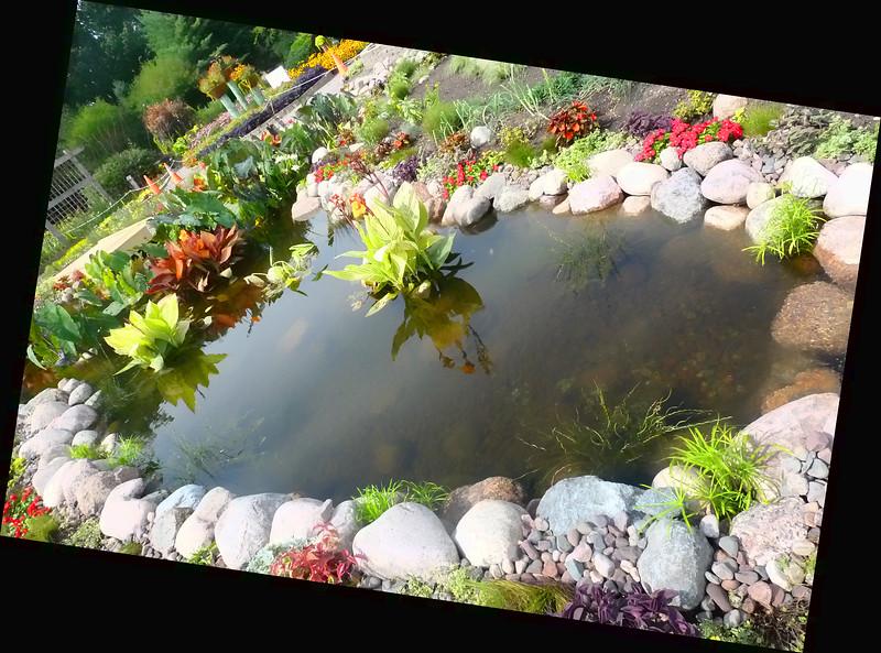 Lily pond #3.jpg